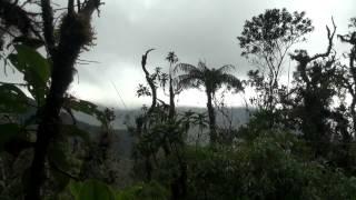 Parque Nacional Podocarpus-Ecuador