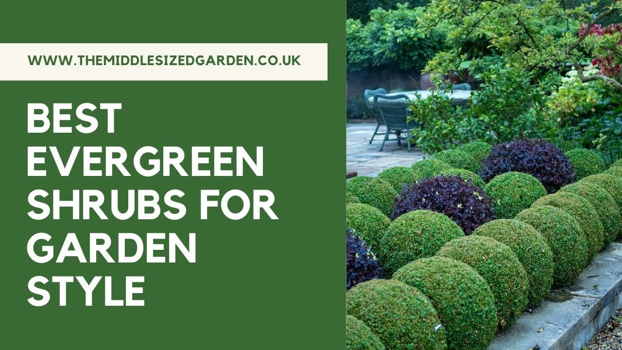 The Best Evergreen Shrubs For Clipping Into Shapes And Simple Topiary Plus 3 To Avoid Youtube
