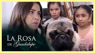 La Rosa de Guadalupe: Lilia cree que su perro puede contagiarla de coronavirus   Tiempo de ayudar