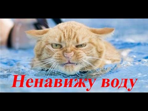 Приколы 2017 лучшие Коты не любят купаться  ��