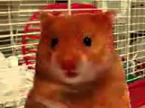 My name is harry the hamster