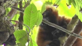 Madagascar Masoala Rainforest