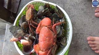 Lần Đầu Tiên Trong Đời Thấy 2 Con Cua nghênh chiến/ Sea crabs