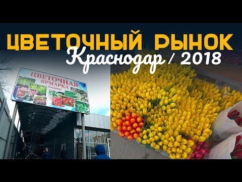 НОВЫЙ цветочный оптовый рынок в Краснодаре 2018  |  Жизнь в Краснодаре