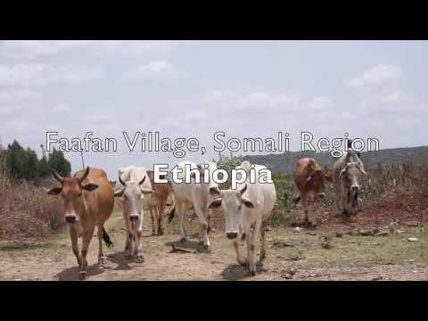 Jigjiga Export Slaughter House Connects Pastoralists to International Markets