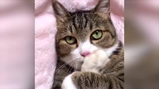 Смешные кошки август 2019 Новые приколы с котами, смешные коты приколы 2019 Funny cats animals #92