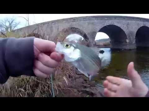 Trout and striper fishing on the Brazos river