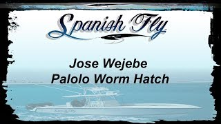 Key West Tarpon Palolo Worm Hatch - Jose Wejebe / Spanish Fly TV