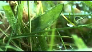 Farm for the Future - BBC Dokumentary 2009