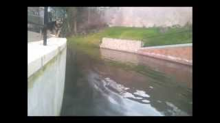 Pro Dog Gloucestershire: Grey Jumping In River