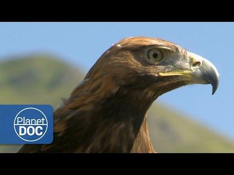 Aguila Real   Documental HD