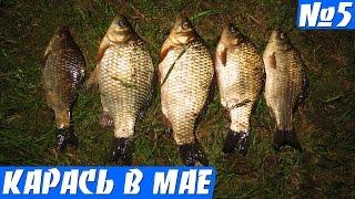 Вечерняя рыбалка на карася (карась весной на поплавок)(Ловля карася выпуск 5. Рыбалка на карася в мае, вечером, ловил на маховую удочку, на червя. Ловля карася весно..., 2016-05-13T11:42:40.000Z)
