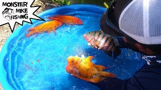 DIY Fish Pool Pond! | Monster Mike Fishing