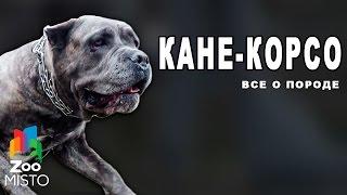 видео Собака Тибетский мастиф: описание породы, фото, цена щенков, отзывы