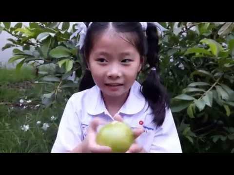 ฝรั่ง มะม่วง -มาเรียนคำศัพท์ผลไม้ ภาษา จีน อังกฤษ วันละคำ 2 คำ