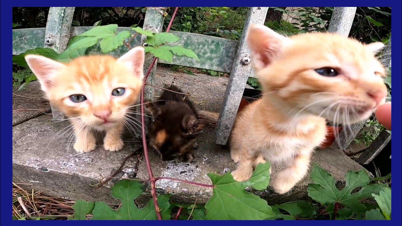 母猫の心配をよそに無邪気に出てきて遊ぶ子猫の3兄弟がカワイイ