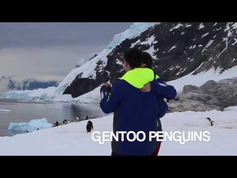 kizomba blog aus hamburg, hier mit pinguinen