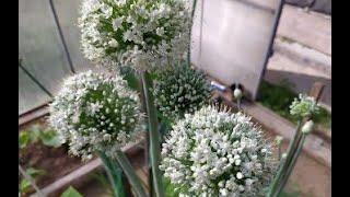 Эксибишен цветёт! )))
