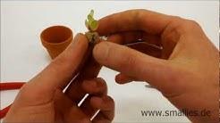 Smallies | Minikaktus | Handykaktus | Minipflanze | Kaktusanhänger