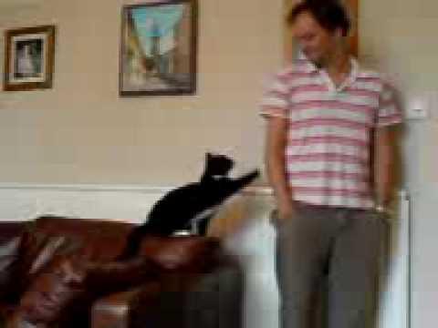 Jessie the attention seeking cat