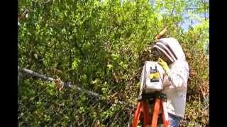Honey Bee Swarm removal, Santa Rosa, California