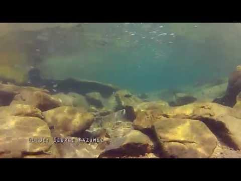 Diving in Lake Tanganyika: Tropheini