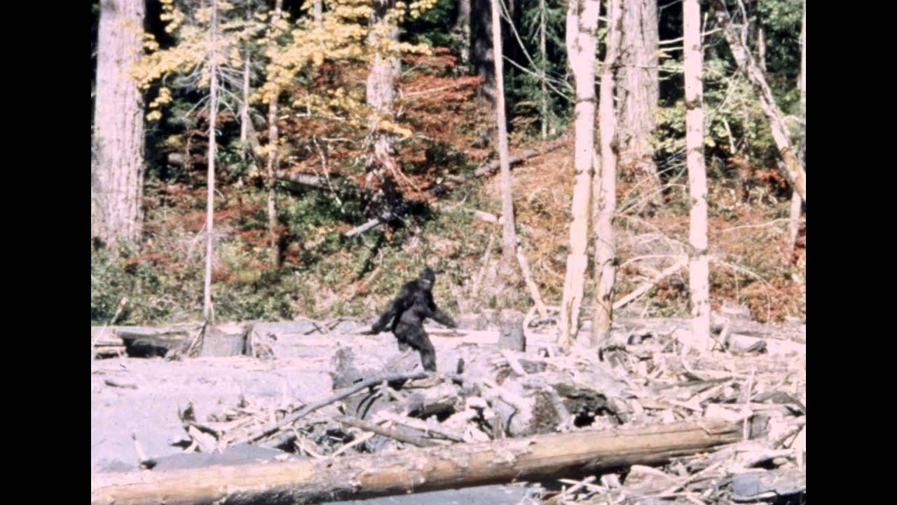 Patterson Bigfoot Film Youtube