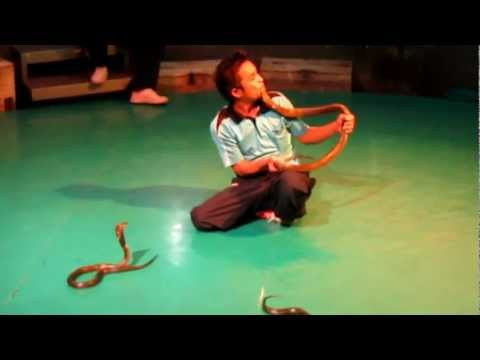 Xiec ran - Snake Farm - Bangkok Thailand