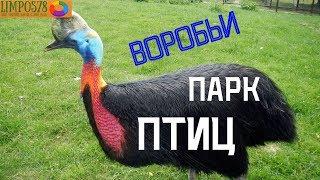 """Парк птиц """"Воробьи"""". Классное место в Калужской области!"""