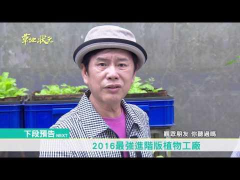 草地狀元-中寮之寶屢創天價枯葉(20160502播出)careermaster