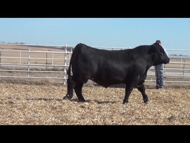 Express Ranches Lot 377