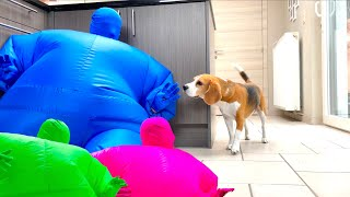Dogs Pranked w/Man in Chub Suits Compilation! Funny Dogs Louie & Marie