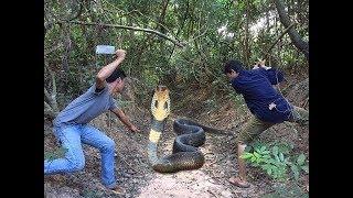 Biệt đội đi săn Hổ Mang Chúa Khổng Lồ trong rừng sâu và cái kết bất ngờ ✔