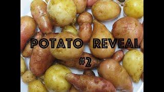 TPS Potato Reveal #2 Igorota, Tollocan, Sarpo Duro, and Muruta
