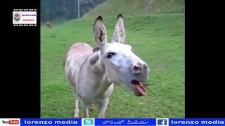 Funny Things Latest Viral Videos | Telugu Funny Videos | Lorenzo Media
