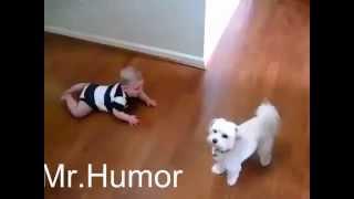 Приколы - дети и животные.Видео!