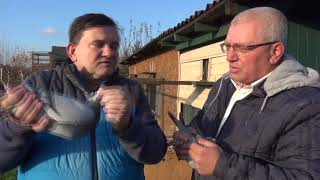 Dudek Aleksander - oddz. 021 Kęty - Hodowla -  gołębie na sprzedaż