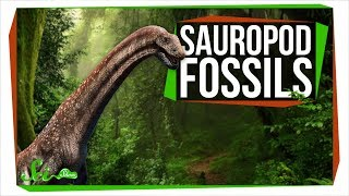 Two New Sauropods Generate Excitement and Controversy | SciShow News