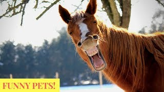 Funniest Pets & Animals of the Week Compilation June 2018 Try Not to Laugh Animals Fail - Part-1