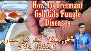 How to treatment Fungle Gils Diseases