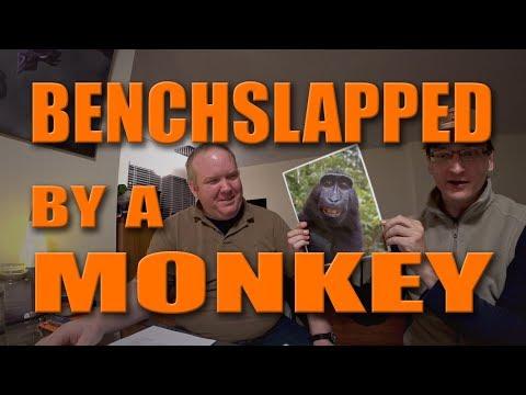 PETA Benchslapped After Weird Monkey Selfie Settlement