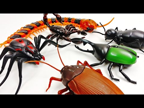 Thumbnail: Super Creepy Toys Collection R/C Spider Cockroach Centipede Ant Hercules Beetle
