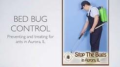 Bed Bug Exterminator in Aurora IL  - Aurora Pest Control Pros