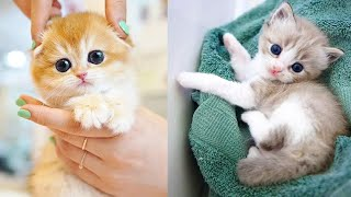 CUTS AND FUNNY CATS- try not to laugh compilation of videos