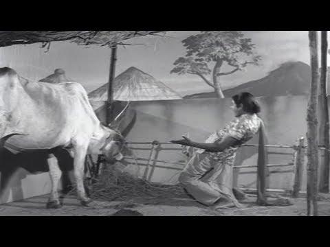 Rajababu Most Popular Comedy Scenes - Volga Videos