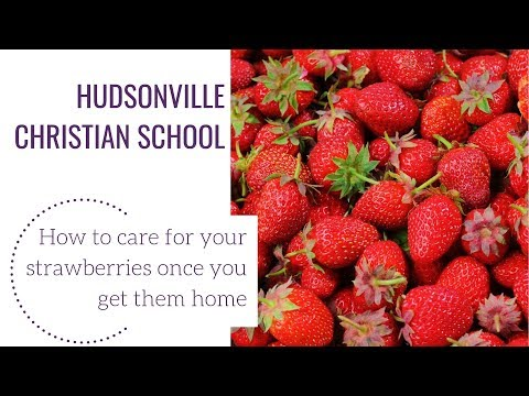 Hudsonville Christian School Strawberry Planting