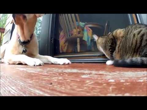 dog-and-cat-get-along-well-|-playful-pets
