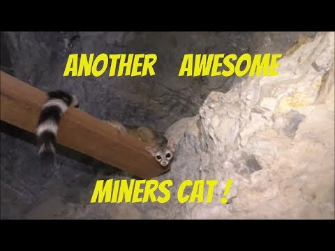 #183 Clouds Of Bats And Another Mine Cat In The Desert Queen Mine!
