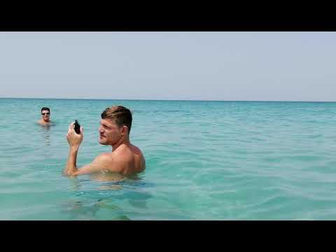 Saadiyat beach club wild dolphin Abu Dhabi