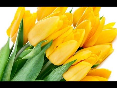 Бесплатная доставка цветов, скидки, фото доставки